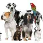 Evcil Hayvan Zil Sesleri indir